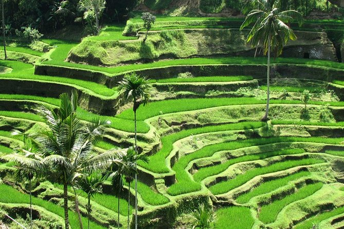 Private Tour: Best of Ubud photo 2