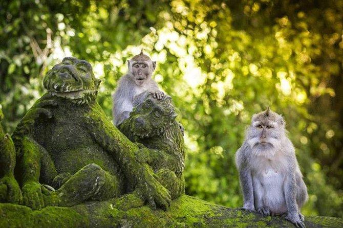 Ubud Highlight: Sacred Monkey Forest, Tegenungan Waterfall, Rice Terrace