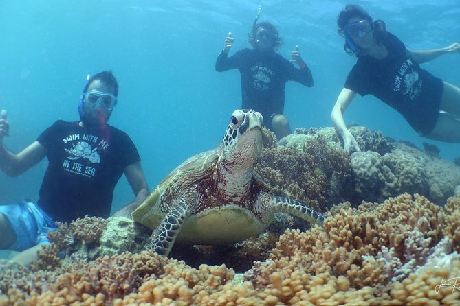 Private Noumea Turtle Tour