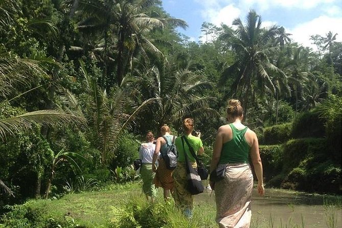 Rice Paddies Trekking Tours with Lunch