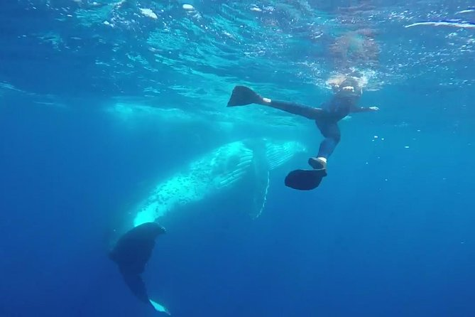 Humpback Whale Swim from Tongatapu island with transfers & lunch