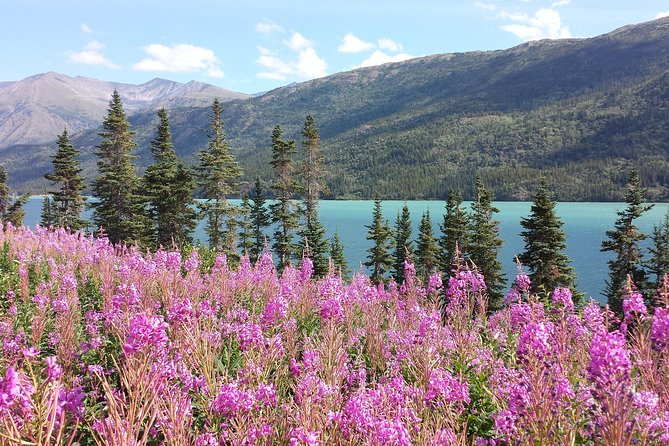 Skagway Shore Excursion: Half-Day Tour to the Yukon Border and Suspension Bridge