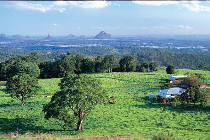Full Day Sunshine Coast Hinterland Luxury Small Group Tour from Brisbane