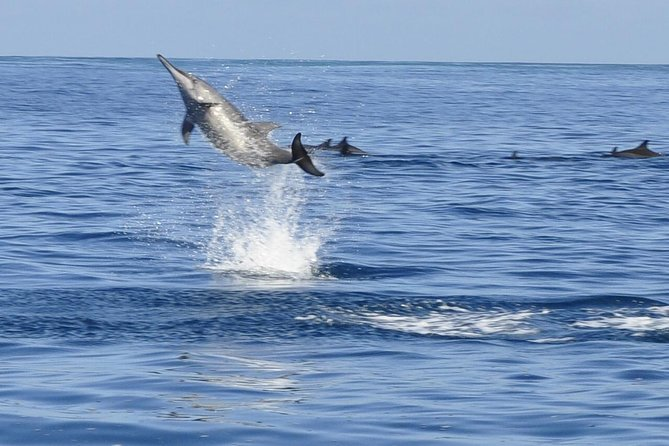 Whale and Dolphin Watching Private Boat Tour from Mauritius