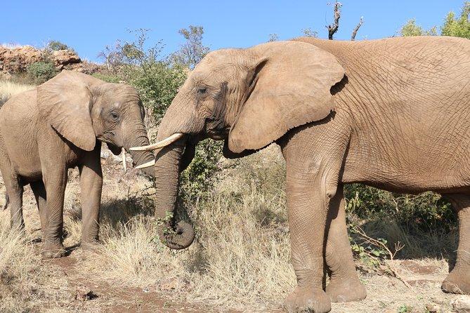 Africa's gentle giants