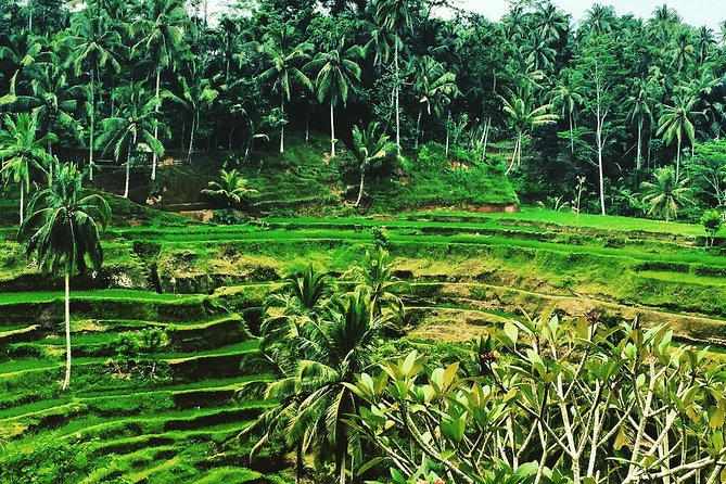 private tour UBUD and around