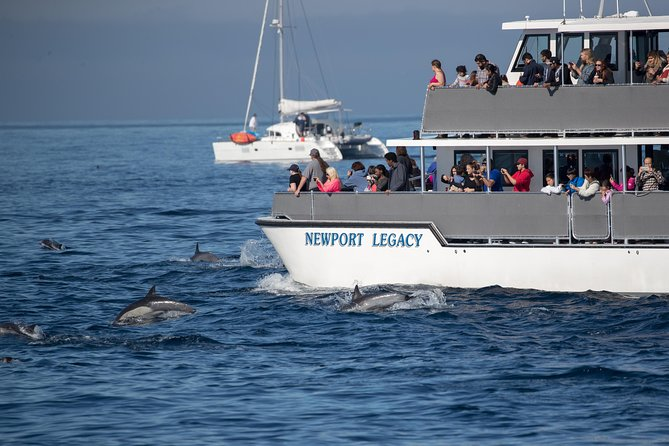 Whale-Watching Cruise from Newport Beach photo 5