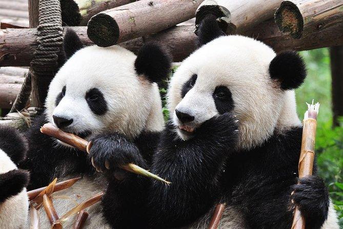 Chengdu Private Sightseeing Tour with Panda Breeding Center Visit