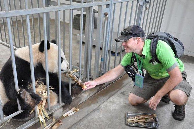 パンダ保護センター1日ボランティア