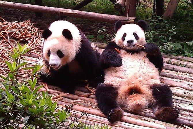 Tour privato: Chengdu Panda Base e Leshan Grand Buddha