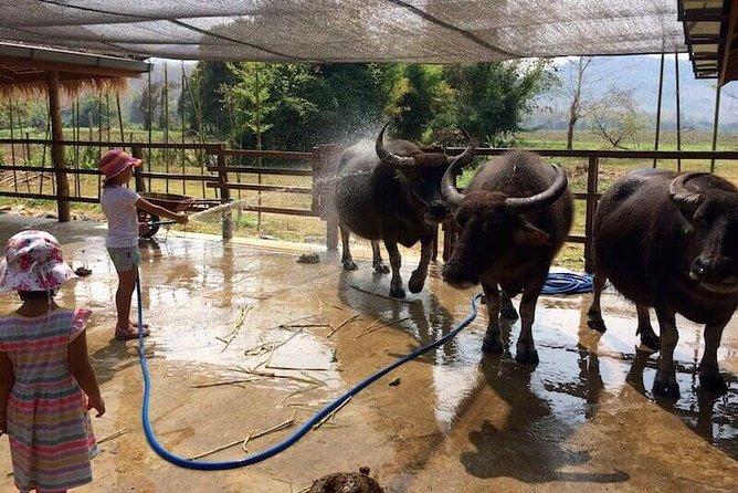 Laos Buffalo Dairy Farm Experience & Kuang Si Waterfall Half Day Tour
