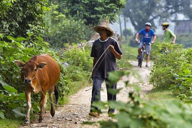 1 day Yangshuo Countryside Cycling Tour