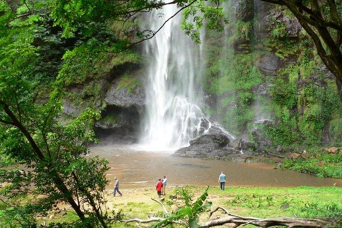 Wli Falls and Tafi Atome Monkey Sanctuary Tour