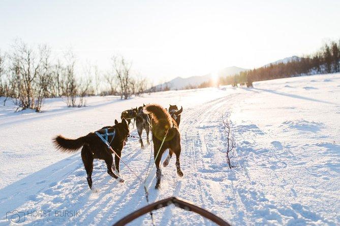 Hundeschlittenfahrt in der Arktis