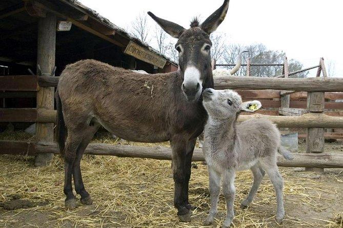 Donkey in village