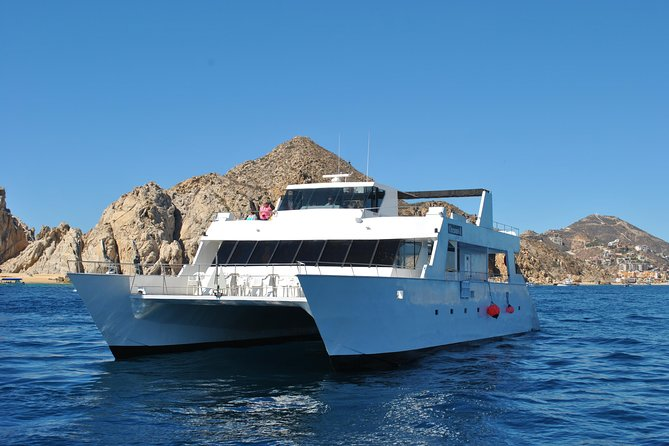 Whale Watching Cruise in Los Cabos