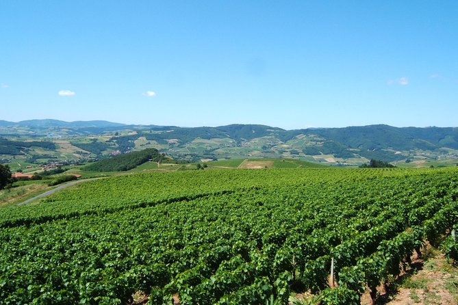 Beaujolais Wine Discovery - Morning - Small Group Tours from Lyon