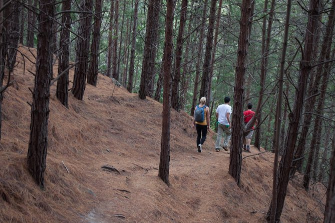 5-Hour Hike in Bogota's East Hills Including Breakfast