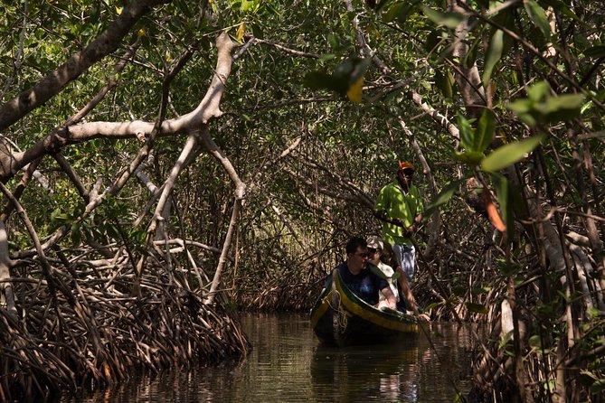 Canoe Trip in the Mangroves