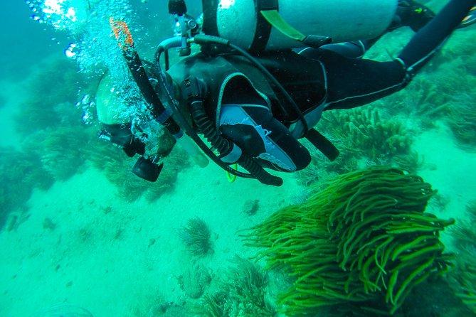 Scuba Diving, Tayrona National Park
