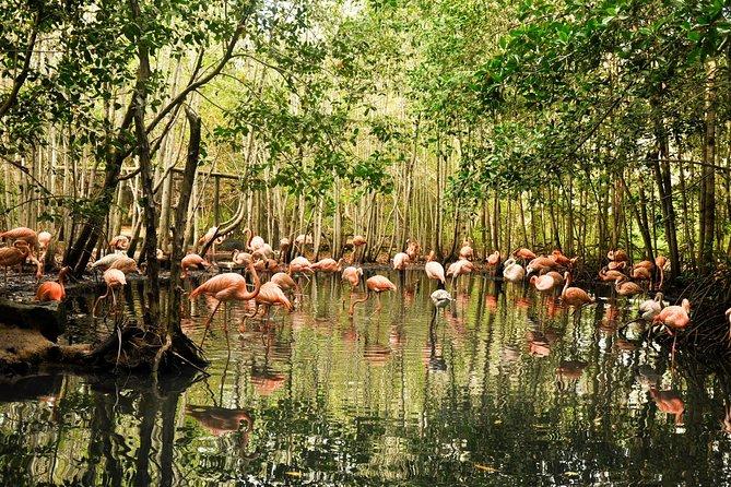 National Aviary trip from Cartagena