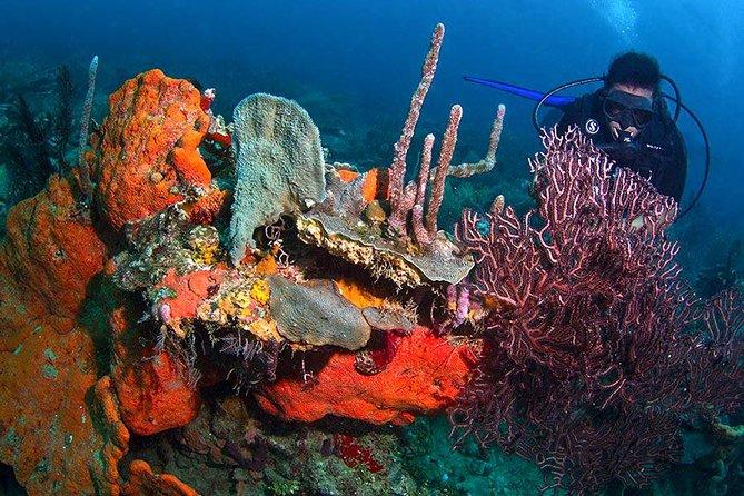 Scuba Diving, Rosario Islands