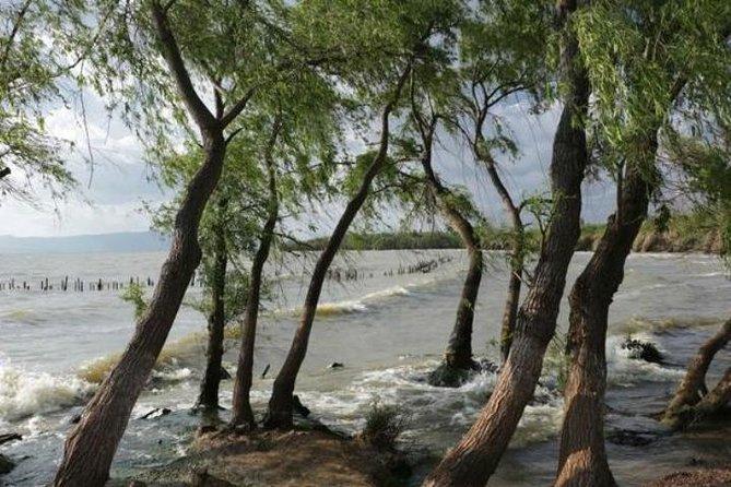 One day tour to eastern coast region of Daichi Lake