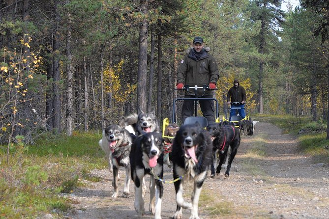 Autumn Husky Sit and Drive Cart Tour from Kiruna