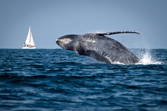 Humpback whales Watching + Samana Eco-Tour