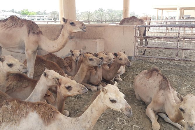 Private City tour and Sightseeing in Bahrain