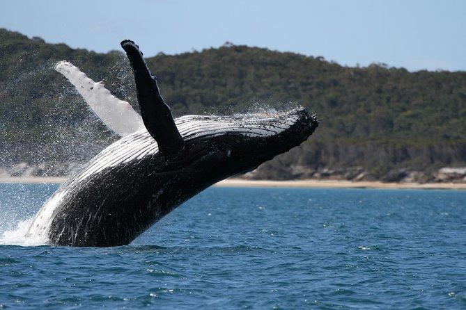 Crociera per l'osservazione delle balene di Hervey Bay
