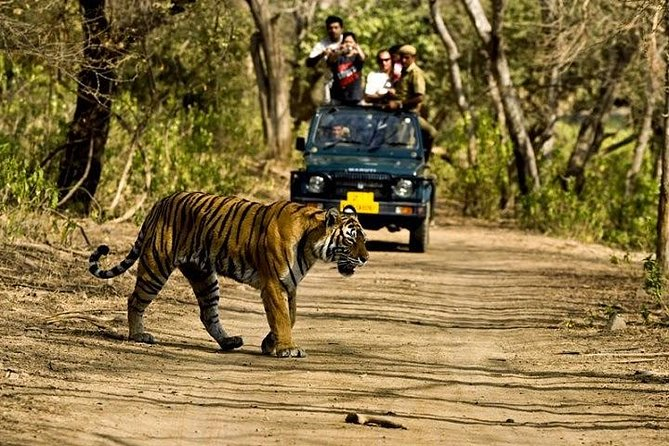 Private 5-Day Ranthambhore Tiger Tour from Delhi including the Taj Mahal, Agra and Jaipur