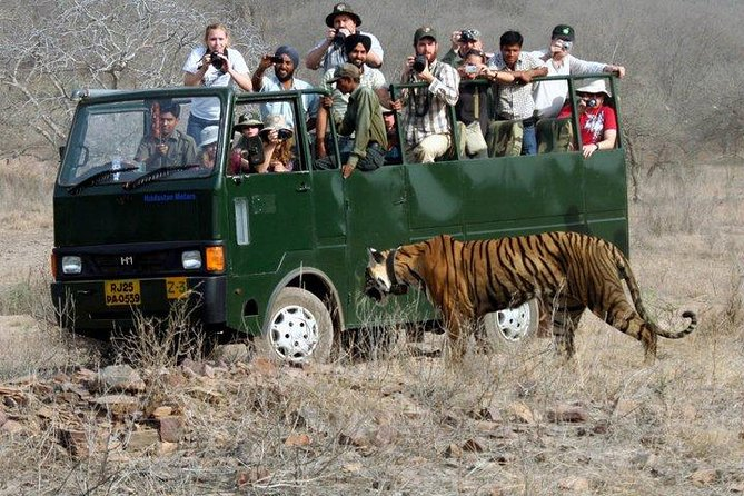 Ranthambore Wildlife Safari with Tickets & Transfer Options photo 2
