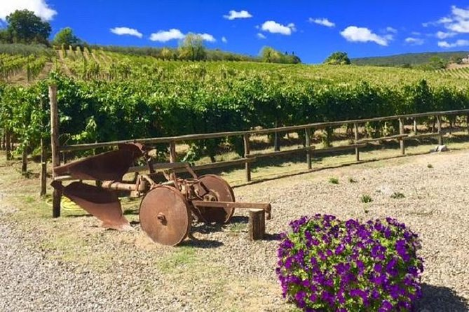 Chianti Wine and Vinci half day Small Group Tour from Montecatini Terme