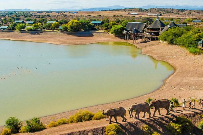 2-Day Glamping South African Wildlife Safari Small Group Tour from Cape Town