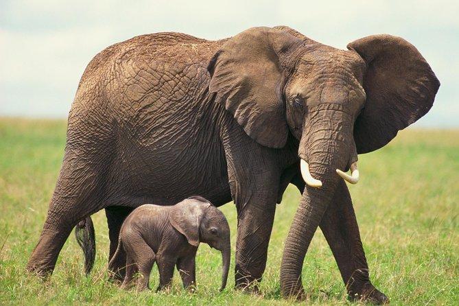 2-Day Private Western Cape Wildlife Safari Tour from Cape Town