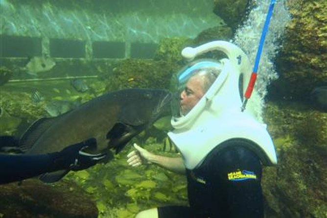 Underwater Helmet-Diving Experience at the Miami Seaquarium photo 2