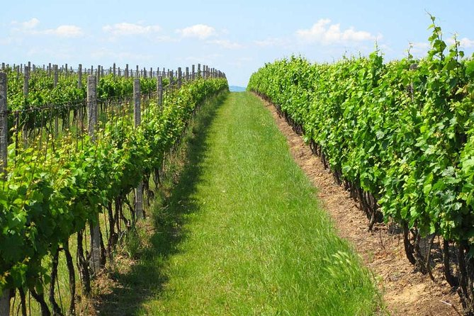 Guided Private Wine Tour with Tasting and Lunch