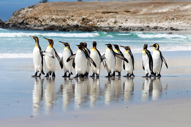 Volunteer Point in Falkland Islands