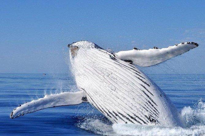 Avistamiento de ballenas desde Augusta en el oeste de Australia