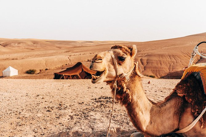 Marrakech Camel Ride in Agafay Desert with Lunch or dinner