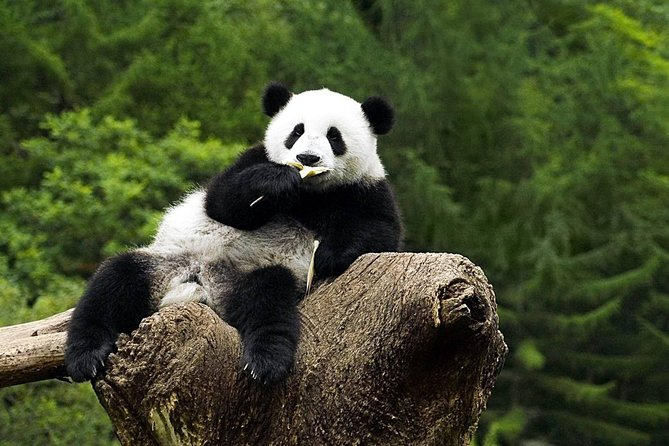 Beijing Panda House and Summer Palace Private Tour by Subway