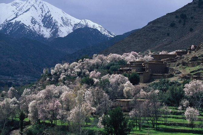 Private Day Trip to the High Atlas Mountains from Marrakech