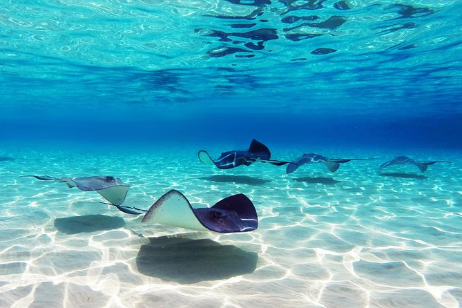 Small Group Snorkeling, Sharks & Stingrays Encounter by Glass Bottom Boat