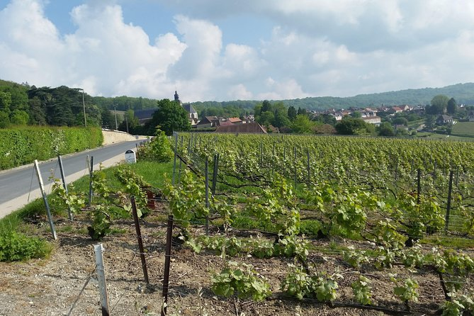 Champagne Tasting Day Tour Moët Et Chandon Family Domains Lunch Included