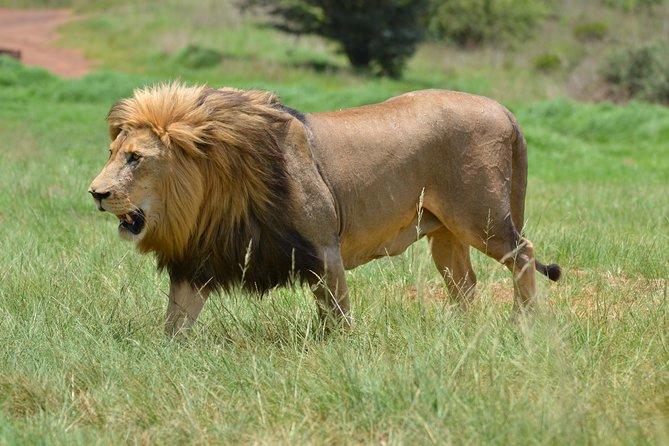 Parque de rinocerontes y leones de Johannesburgo