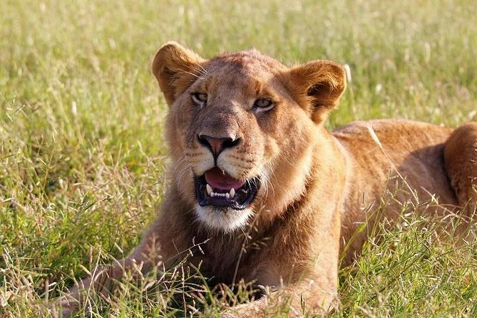 Experiencia Lion Safari Park