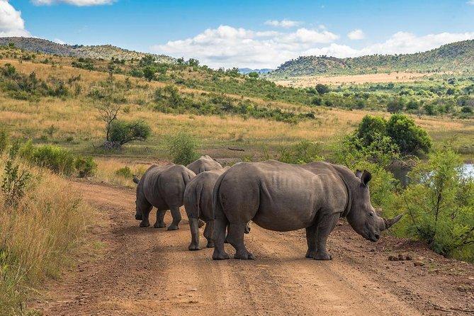 Sun City y Pilanesberg Game Reserve (Vehículo cerrado)