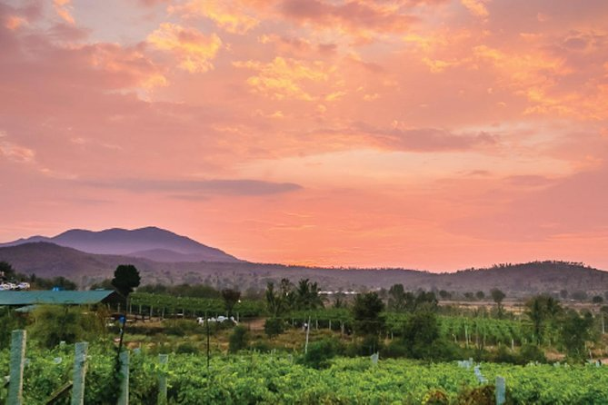 バンガロールからのワインテイスティングとランチを含むブドウ園へのプライベートデイトリップ