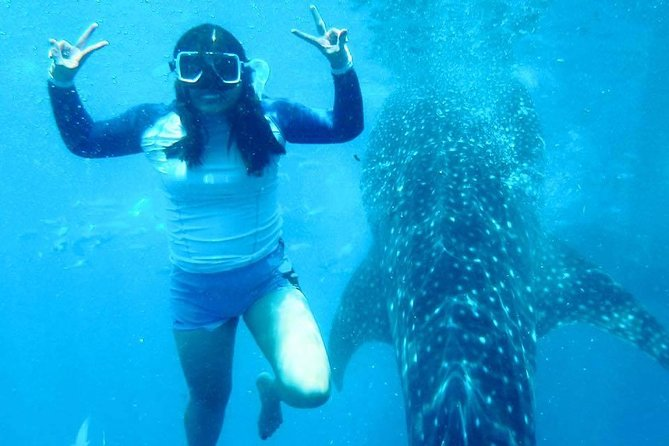 Whale Shark Swimming with Halal Lunch